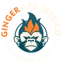 Ginger Ape Seed Company Logo